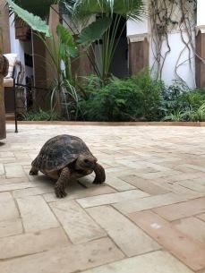 Resident turtle. <3