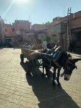 Donkey's work sooo hard in Morocco!